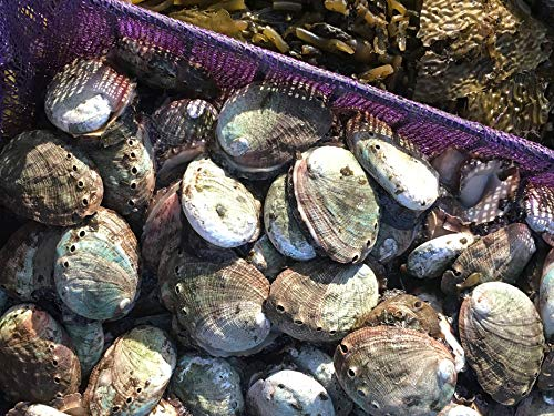 S2 E6: Dying Oceans - Abalone Restoration in California