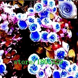 Flores de semillas para la escalada jardín de rosas 50pcs Floer Plantas PROMOCIÓN GREAT plantadores Bonsai