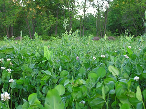 1 acre 3-Pound Imperial Chic Magnet Food Plot Seed Spring and Fall Planting