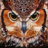 DIY 5D Diamond Painting by Number Kits, Crystal Rhinestone Diamond Embroidery Paintings Pictures Arts Craft for Home Wall Decor - Owl(1212 inches)