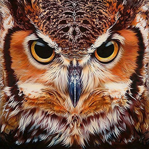 DIY 5D Diamond Painting by Number Kits, Crystal Rhinestone Diamond Embroidery Paintings Pictures Arts Craft for Home Wall Decor - Owl(1212 inches) by XiaoDou