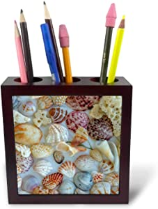 3dRose Collection of Seashells from Sanibel Island in Florida, USA - Tile Pen Holders (ph_331193_1)