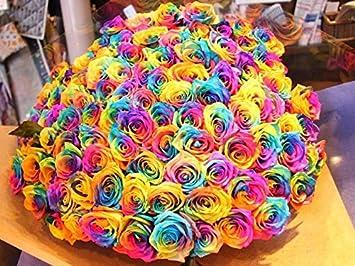 amazon com 50 real fresh rainbow rose exotic and amazing