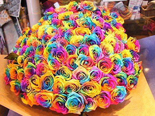 50 Real Fresh Rainbow Rose | Exotic and amazing by FarmDirect