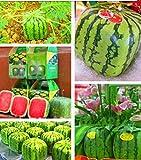 50 Square Watermelon Seeds Sweet Fruit Seeds New Generation Scarce Home Garden Backyard Precious Heirloom
