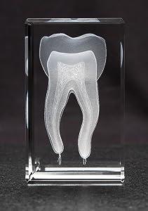 Anatomy Crystal (Tooth 1lb)