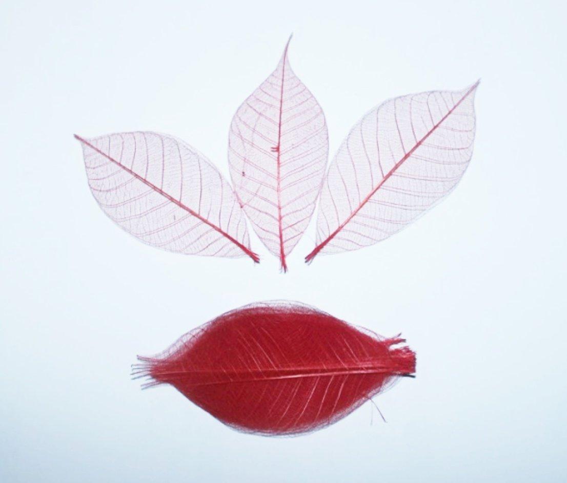 100 foglie scheletro rosso albero della gomma naturale Scrapbooking mestiere fai da te di carta matrimonio ChangThaiDesign