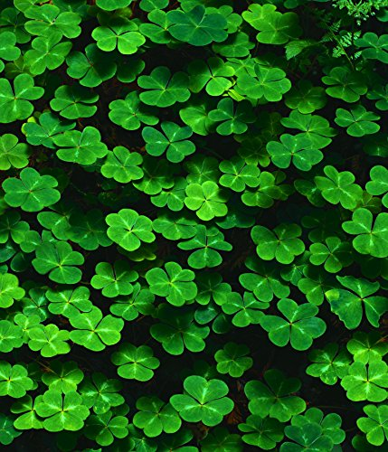 St. Patrick's Day Greeting Cards - Lots of Luck - LOL100. Business Greeting Card with an Image Featuring a Field of Clovers. Box Set Has 25 Greeting Cards and 26 Green Colored Envelopes.