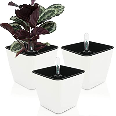 GreenSun self-Watering Planter eco-Friendly Flower Pot Decorative Garden Flower Pot 5 inch,Water Level Indicator for All Indoor Plants, Flowers, Herbs, Leaf Plants,Succulents.Square White, Set of 3: Garden & Outdoor