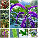 AGROBITS 100 pcs/Bag Exotic Acalypha Hispida Plant Outdoor Bonsai Potted Garden Blooming Flower Planta Seedfor Home Decor Easy to Grow: Mixed