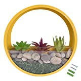 JUYOU Round Glass Wall Vases Planter, Wall Mount