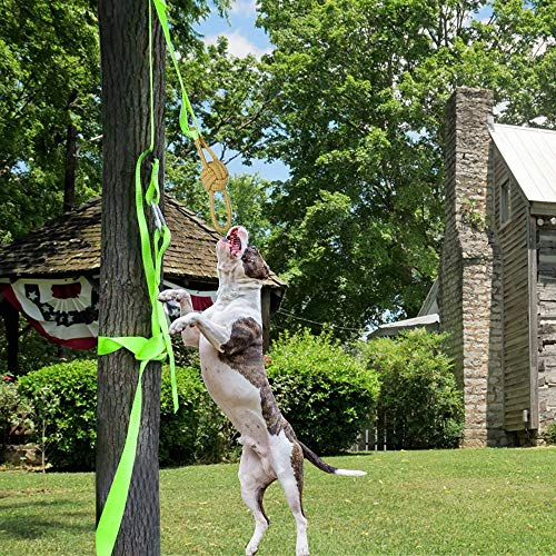 Outdoor Hanging Bungee Dog Toy, Adjustable Interactive Dog Toy, Rope Tug of War Toys for Pitbull & Medium or Large Dogs, Outdoor Hanging Exercise Play, Durable, Safe -Muscle Builder (Multicolour)