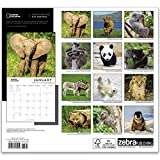 National Geographic Baby Animals 2021 Wall Calendar