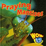 Praying Mantises, Heather C. Hudak, 159036872X