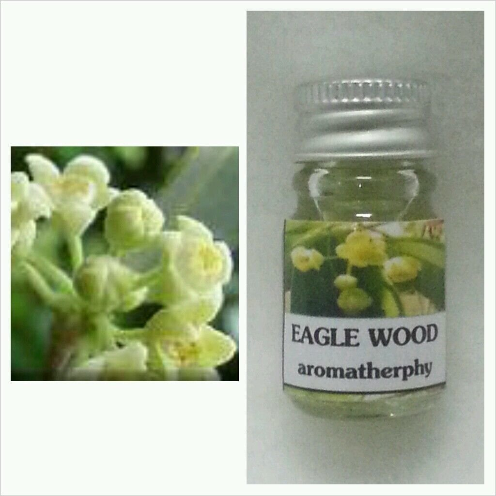 Bread Flower (Chommanad) Scent (1 Piece) Andeagle Wood (Krissana) Aroma Essential Oil (1 Piece) Thai Spa Aroma Pure Essential / Fragrance Oil for Spa Bath, Candle Lamp Burner, 5ml by M.G.SHOP