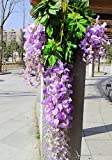 e-Joy 24 Piece Realistic Artificial Silk Wisteria Vine Ratta Silk Hanging Flower Plant for Home Party Wedding Decor and Other Various Events, Each Purple