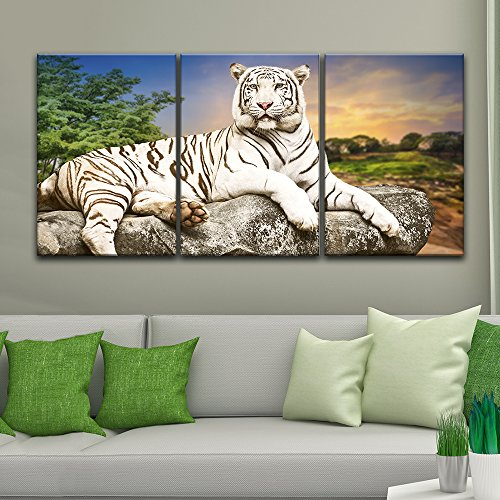 3 Panel A White Tiger Lying on a Rock Gallery x 3 Panels