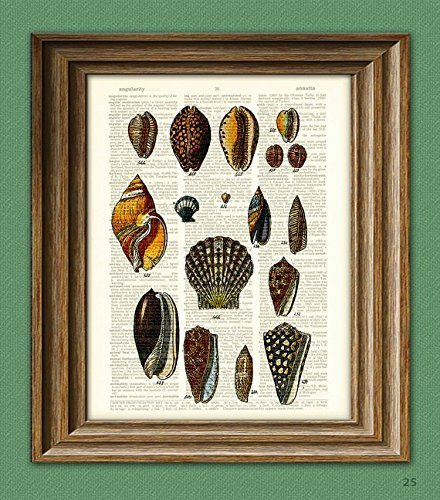 Vintage Shell - Colorful Sea Shells of the World beautifully upcycled vintage dictionary page book art print