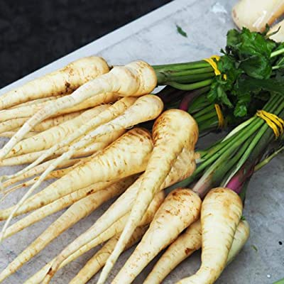 Determina Garden - 100PCS Parsnip Seeds, Heirloom, Organic, Non GMO Home Garden Vegetables Seeds: Clothing