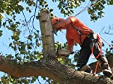 Tree Trimming Service Start Up Sample Business Plan CD!