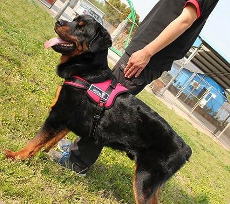 Big perro Golden Retriever powerharness suave no pull Arnés grande ...