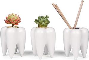 ComSaf Cute Tooth Shaped Pen Pencil Holder, White Ceramic Succulent Planter Pots for Home Office Decoration Desk Organization, Set of 3