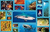 National Geographic Animal Encyclopedia: 2,500
