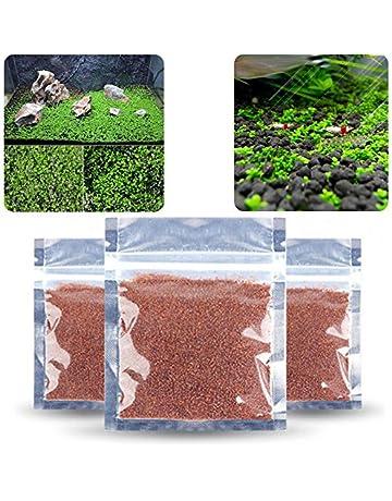 Aubess - Semillas de plantas acuáticas fáciles de cultivar para decoración de peceras - 1pcs!