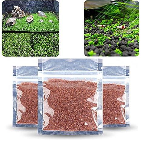 Sinotech Plantas de acuario - Semillas acuáticas fáciles de cultivar en vivo plantas peceras decoración de acuario: Amazon.es: Productos para mascotas