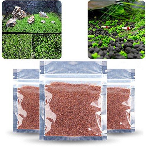 LEEBA Plantas de Acuario Semillas Fácil Acuático Crecimiento Vivo Plantas Peces Decoración Anterior (10 g/Paquete): Amazon.es: Productos para mascotas