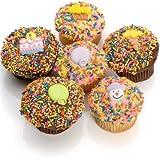 Birthday Belgian Chocolate Gourmet Cupcakes- 6 Pack