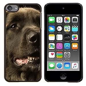 TECHCASE---Cubierta de la caja de protección para la piel dura ** Apple iPod Touch 6 6th Touch6 ** --Perro perdiguero revestido plano Perro Negro