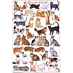 Laminated Cats of the World Educational Science Chart Poster Laminated Poster 24 x 36in by Feenixx