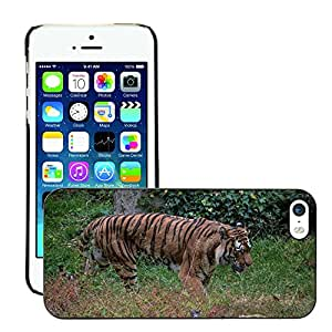 Hot Style Cell Phone PC Hard Case Cover // M00134535 Tiger Nature Animal World Predator // Apple iPhone 5 5S 5G