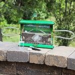 Fat Brain Toys Ant Jungle - Ant Jungle Organic & Green