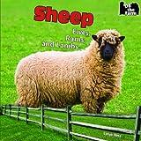 Sheep, Lorijo Metz, 1448813417