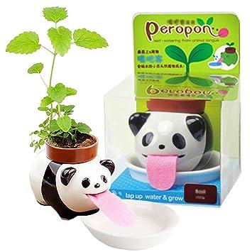 4Size Cute Self Watering Flower Plant Pot Houseplant /&Herb Windowsill Planter UK
