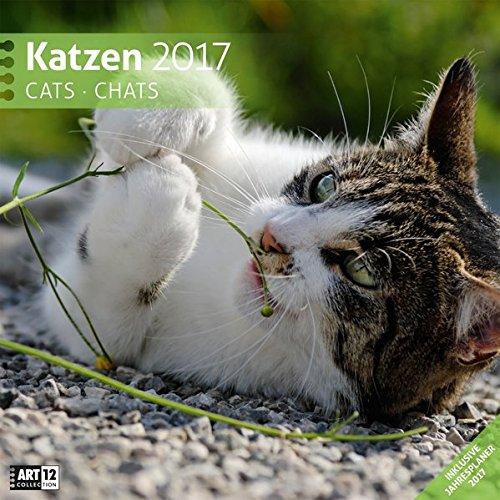 Katzen 30 x 30 cm 2017