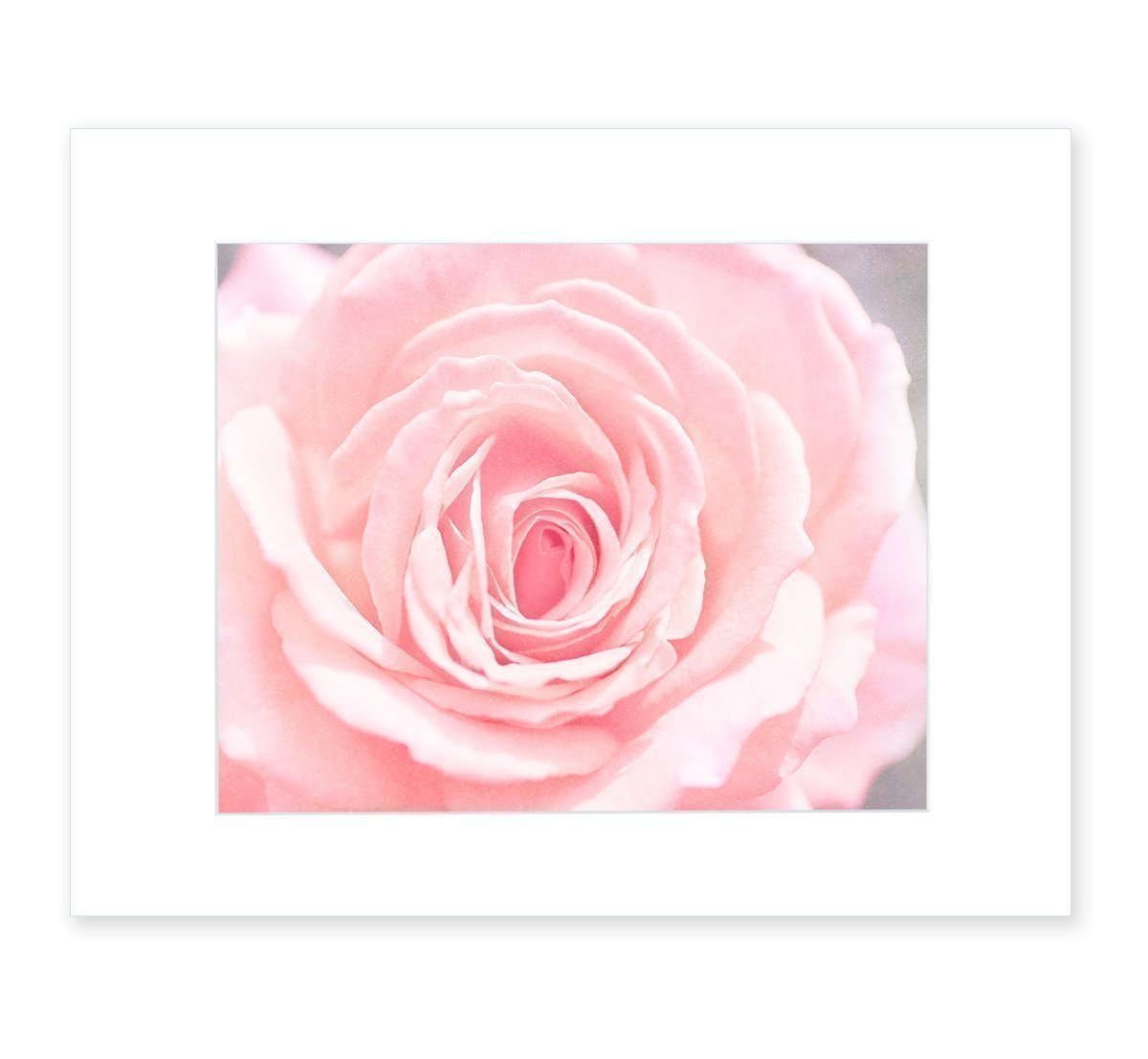 Pink Wall Art, Rose Flower Botanical Artwork, Chic Floral Decor, Girls Bedroom Picture, 8x10 Matted Photographic Print (fits 11x14 frame), 'Pink and Shabby' by Offley Green