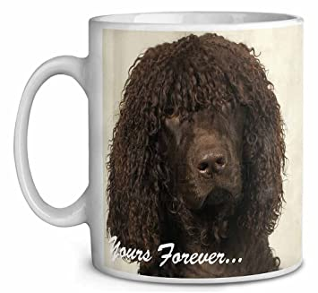 Irish Water Spaniel \