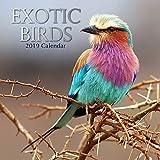 Exotic Birds 2019 Calendar