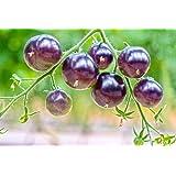 Tomaten 'OSU Blue' 10 Samen,Lila, Schwarze Tomaten - NON GVO, Süß, fast schwarz, selten
