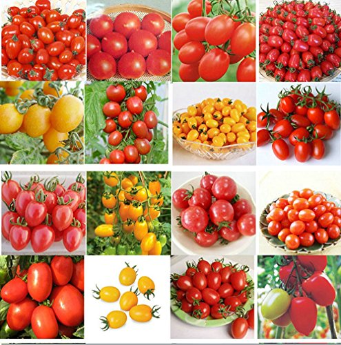 200pcs Mix Tomoto Seeds , Purple Black Red Yellow Green Cherry Peach Pear Tomato Seed Organic Food for Garden