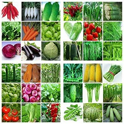 Vegetable Garden Mix Seeds Non GMO Hybrid Survival Plant 100 PCS : Garden & Outdoor