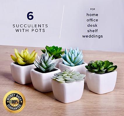 Echt Home Artificial Succulent Fake Plants For Decoration Living Room,  Desk, Office, Shelf