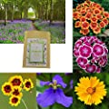 2000+ Wildflower Seeds Collection (5 Individual Seed Packets), Perennials Flower Seeds for Garden Planting