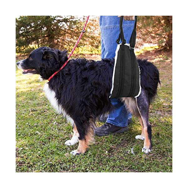Bolux Portable Dog Sling Rear Legs – Dog Lift Harness for Back Legs, Adjustable Hip Support Harness for Canine Aid… Click on image for further info. 4
