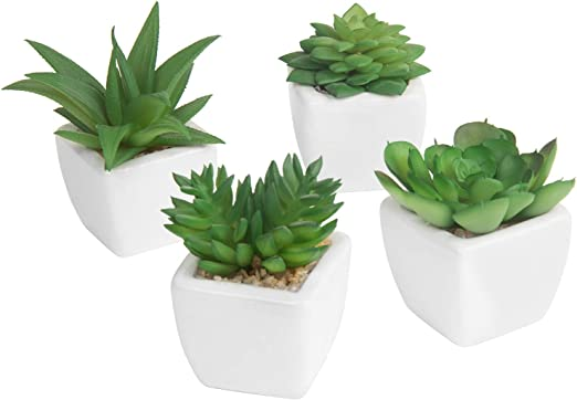 3/ mini plantes d/écoratives en pot de MyGift