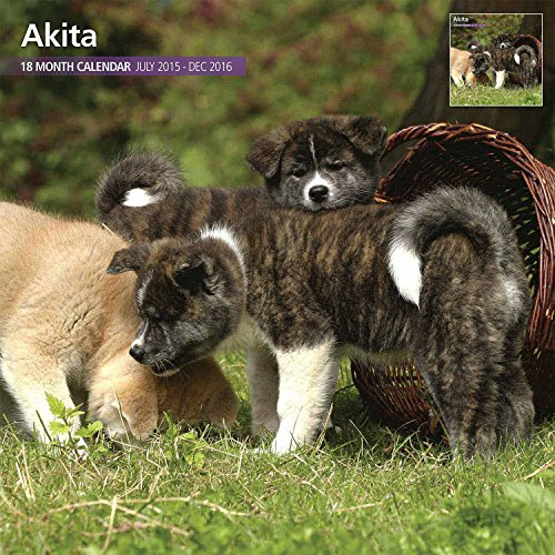 Akita 18 Month 2016 Traditional Wall Calendar
