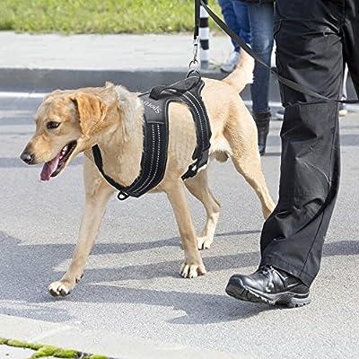 rabbitgoo® Arnés Perro de Alta Robustez Reflexivo Correa para ...